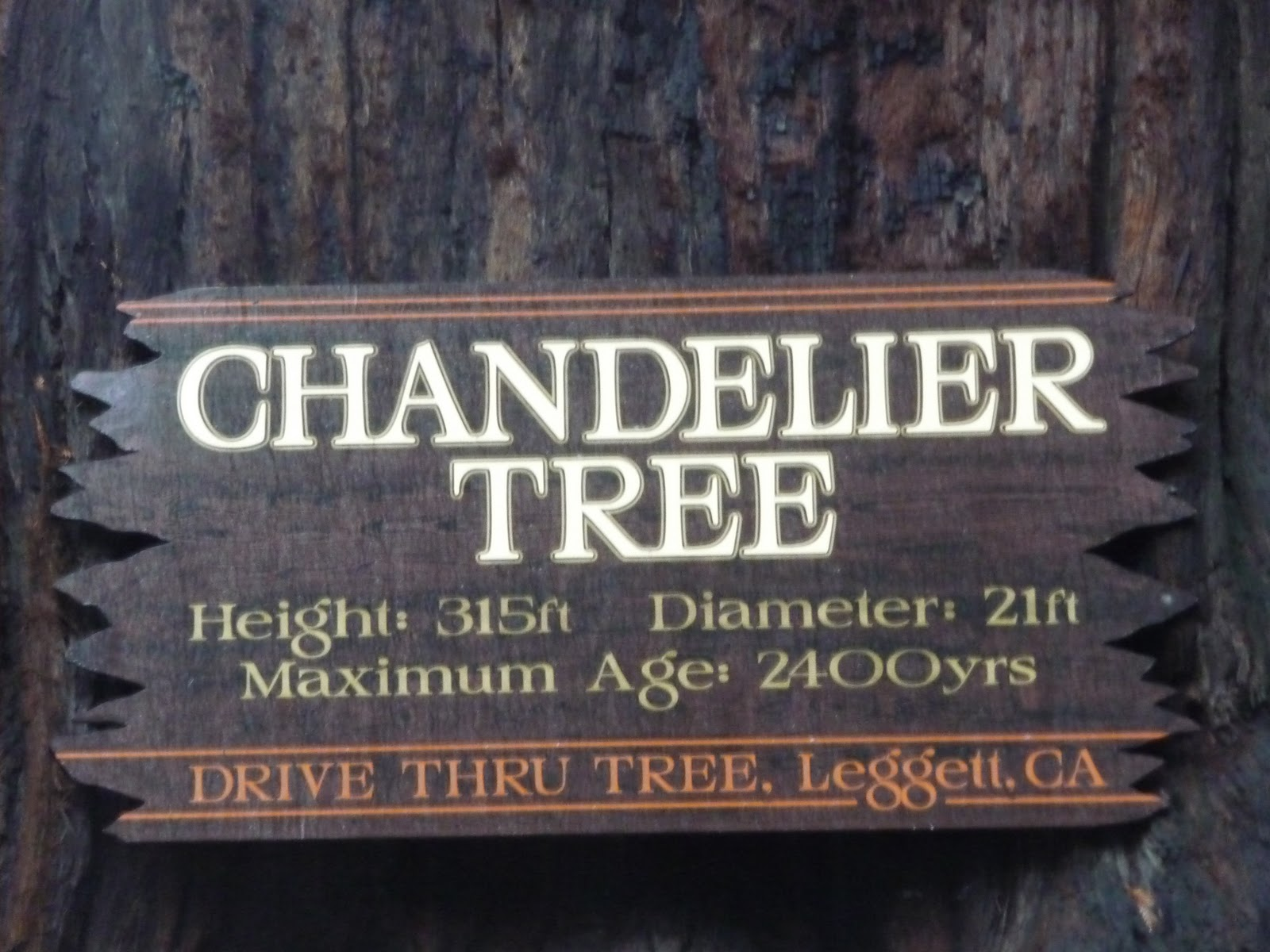 The Chandelier Drive Thru Tree 1001 Scribbles